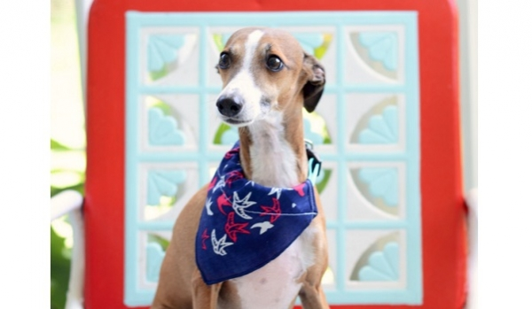Tutorial: Easy DIY dog bandana