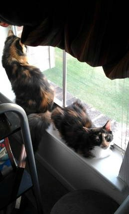 twinkies looking out window