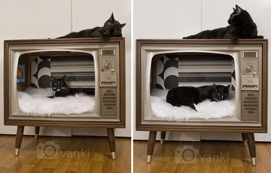 TV_CatBed3