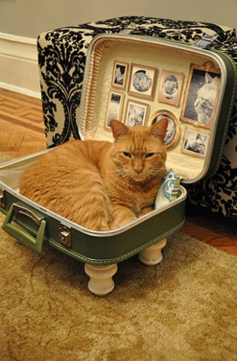moderncat_diy_suitcase_catbed_3_0