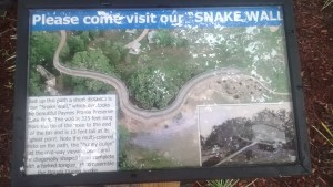About Queen Snake
