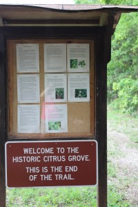 The citrus grove at the end of the trail.