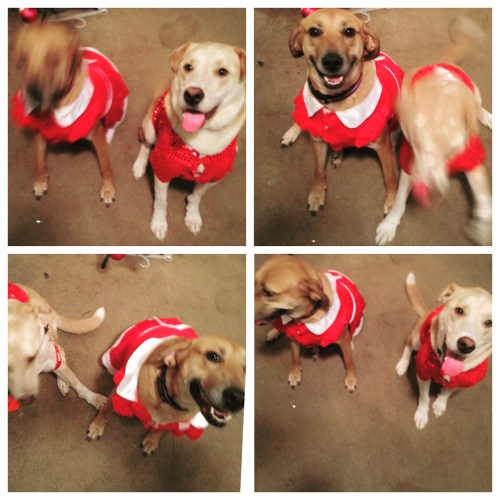 I really tried to get a nice, festive photo of Albus and Lily as Mr. & Mrs. Claus for you guys, bu they just weren't having it.