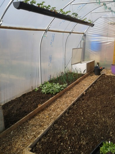 Poly tunnel March 2014