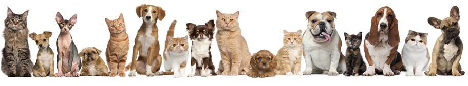 Dogs and Cats, Pet Patterns and Tutorials