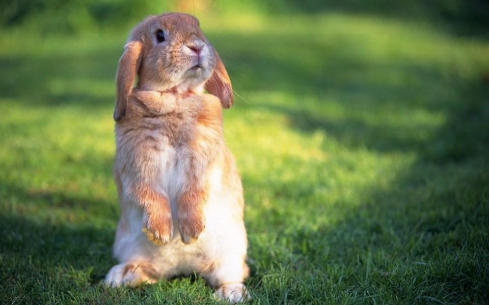 Cute-Rabbit-hd-Wallpapers1[1]