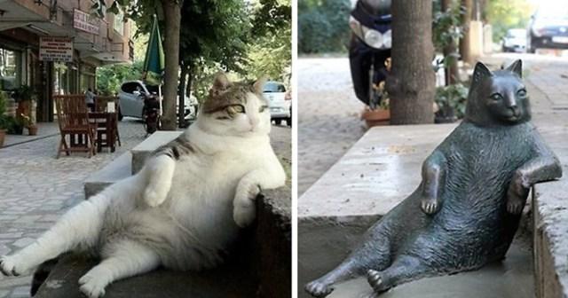 gato (animal)