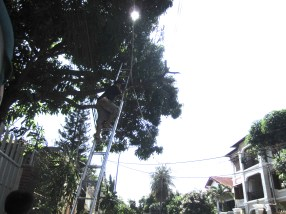 """This was just """"shocking"""" to me. They were trimming the trees so they took their metal ladder and leaned it against the crazy powerlines. Didn't get a photo of the insane chain saw they would carry up there and saw next to the power line."""