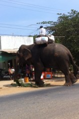 This is the elephant we saw as we were driving. Not a great shot as it's a screen shot of a video I took. Anyways, that doesn't matter at all does it. Apparently this guy sells medicine. #black market? # keepsitinthetrunk??