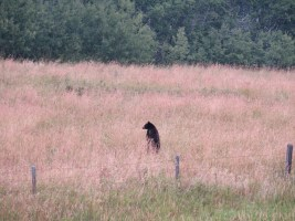 This was cool, I think this may have been the first time I saw a bear stand up on its hind legs!