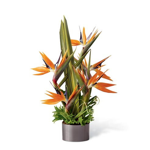 Birds of paradise plant delivery for gifts ideas for dads