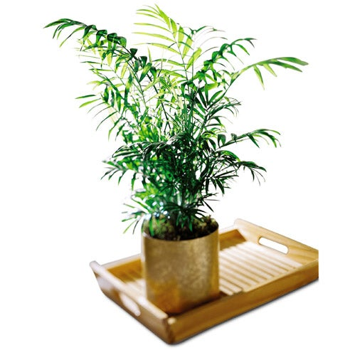 Fathers day gift ideas and indoor palm plant of cheap flowers