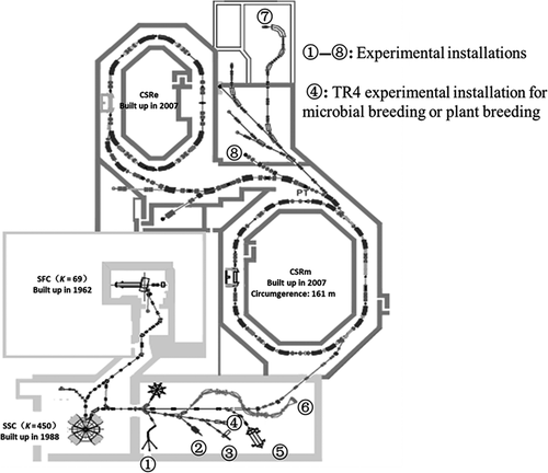 Recent advances of microbial breeding via heavy‐ion