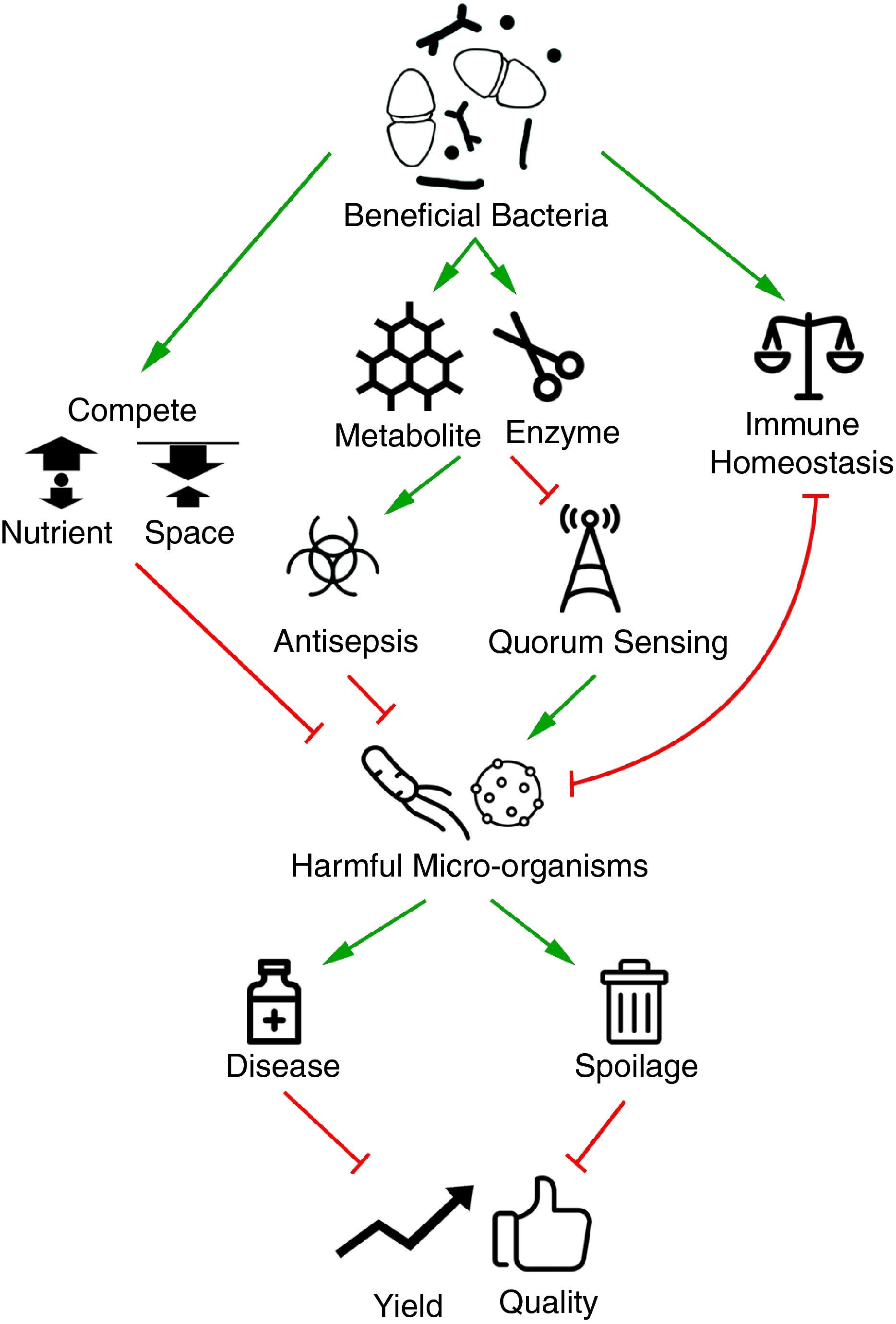 Beneficial bacteria for aquaculture: nutrition