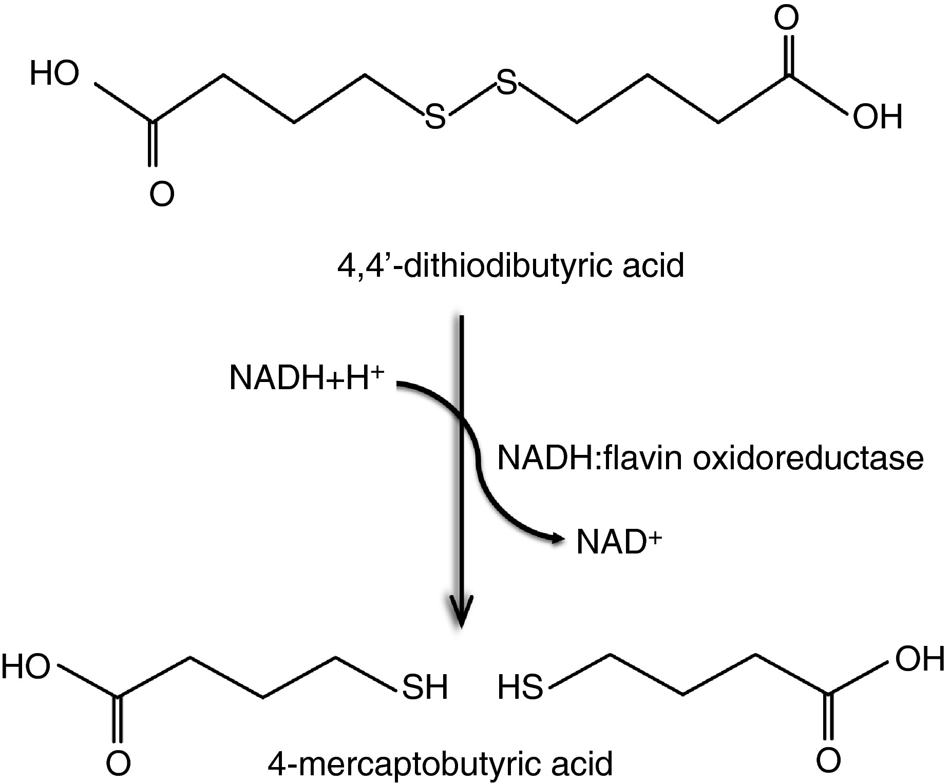 The NADH:flavin oxidoreductase Nox from Rhodococcus