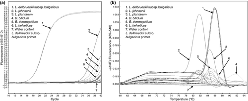 Species‐specific quantification of probiotic lactobacilli