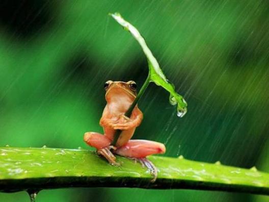 Enough rain to drown a frog