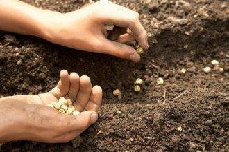 plantarea-semintelor