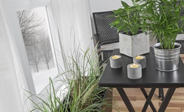plante-care-purifica-aerul