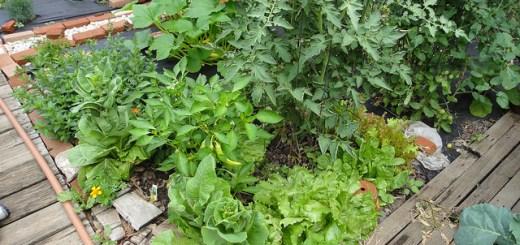 Cum-sa-ai-o-gradina-de-legume-pe-100-mp