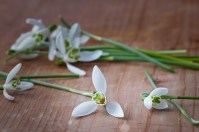 lily-of-the-valley-1230998_640