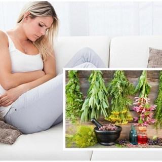 plante-medicinale-care-ajuta-in-cazul-tulburarilor-de-menstruatie