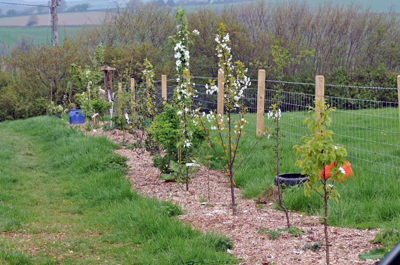 13 sfaturi utile pentru plantarea pomilor fructiferi primavara