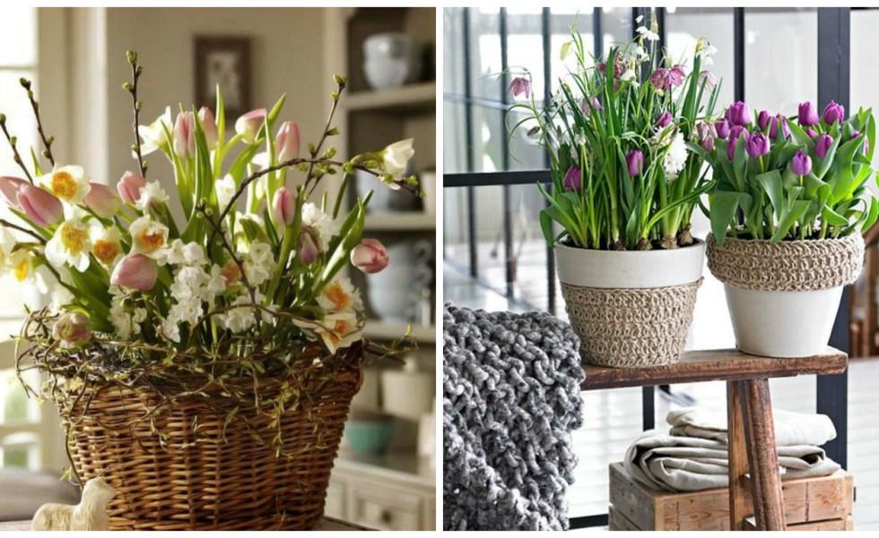 Idei pentru decorarea casei cu flori de primavara in ghivece