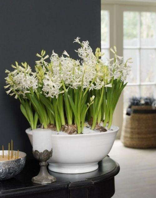 decorarea casei cu flori de primavara zambile