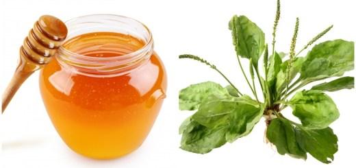 Reteta sirop de patlagina cu miere. Cel mai bun remediu contra bolilor infectioase si respiratorii