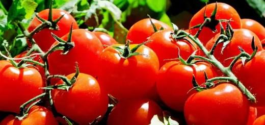 Care sunt cele mai bune soiuri de rosii ce pot fi cultivate in Romania