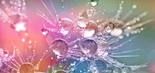 Descoperire Bacteria care poate purifica apa