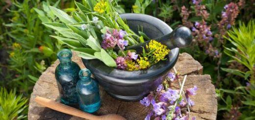 Top 4 plante medicinale eficiente in afectiunile maduvei spinarii