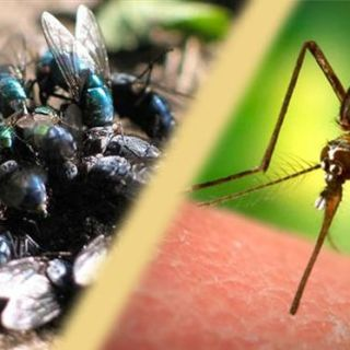 Cea mai buna solutie naturala contra insectelor specifice sezonului cald
