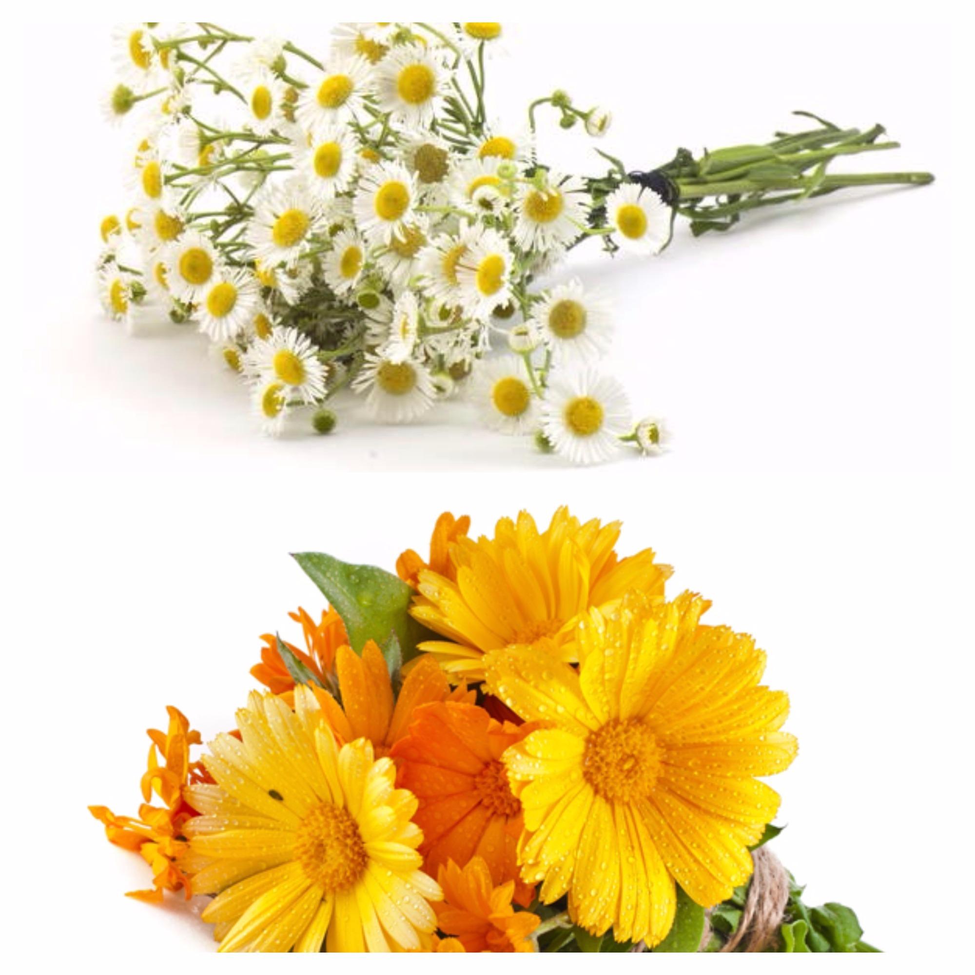 Sanatate din natura cu flori de galbenele si musetel