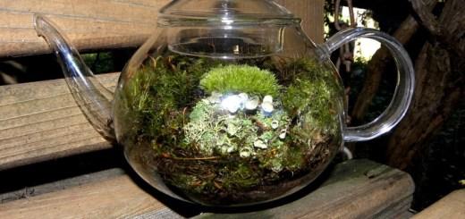 Ceaiul din licheni de piatra, un bun remediu in tratarea afectiunilor respiratorii si stimularea digestiei