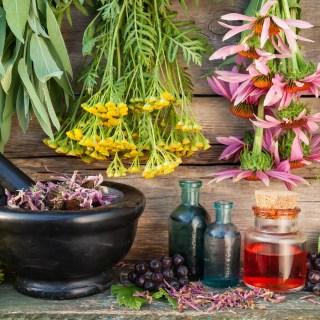 Cum se folosesc plantele medicinale. Cele mai bune sfaturi pentru o preparare corecta
