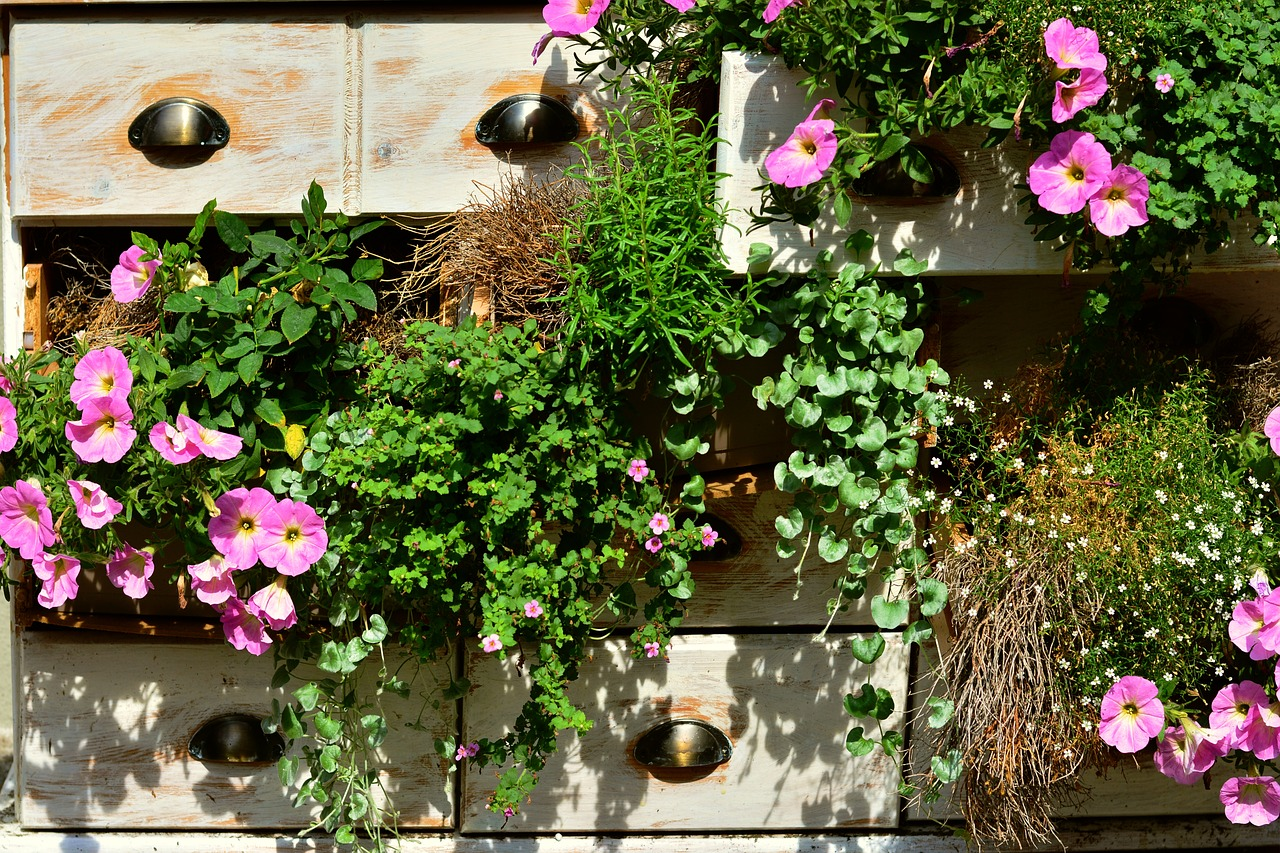 7 plante de agatat la balcon care iti vor face casa speciala