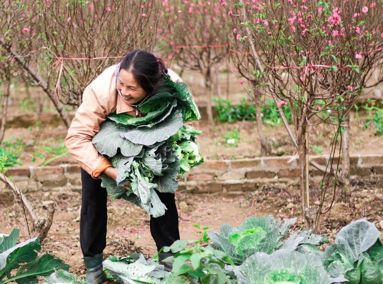 Noi reguli pentru alimentele bio. Cum vor fi afectati fermierii