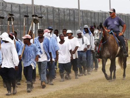In a scene little changed since slavery, prisoners at Angola, the 18,000-acre former plantation that now serves as the Louisiana State Penitentiary, the largest maximum security prison in the U.S., are marched out to the fields for a long day of unpaid work.