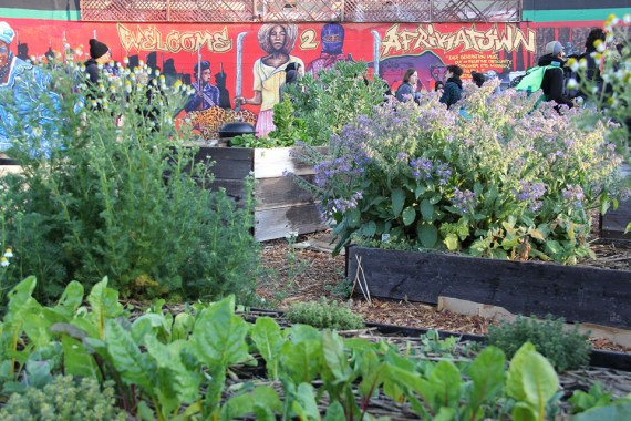 "At AfrikaTown, veggies and herbs are leaping out of the ground this spring. Nearby, a sign on the fence reminds everyone: ""Food is medicine."""