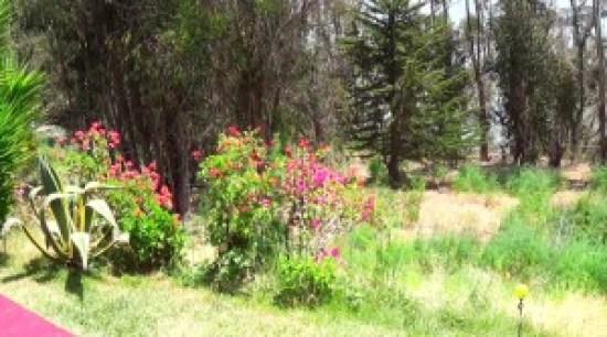 Pretty woods on Yerba Buena Island – Photo: Carol Harvey
