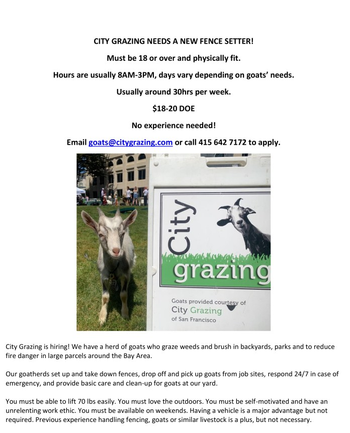 City-Grazing-0719, Want to tend a herd of goats?, Help Wanted