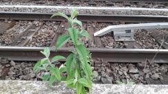 perronplanten_3