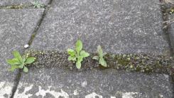 perronplanten_5
