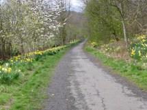 Dalgety Bay Aberdour Daffodil Walk