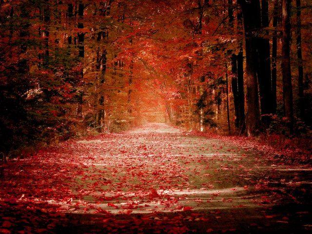 autumn_road1