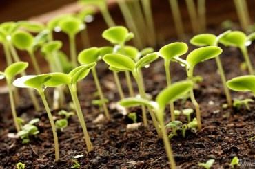 Проект Правил субсидирования в растениеводстве