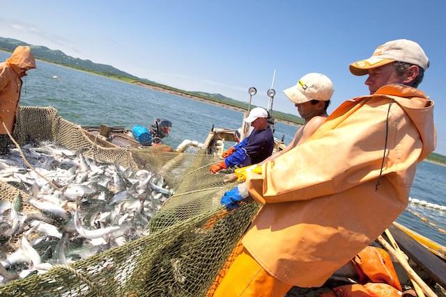 Споры вокруг рыбы