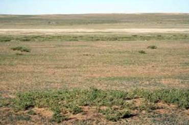 В Акмолинской области массово изымают земли сельхозназначения